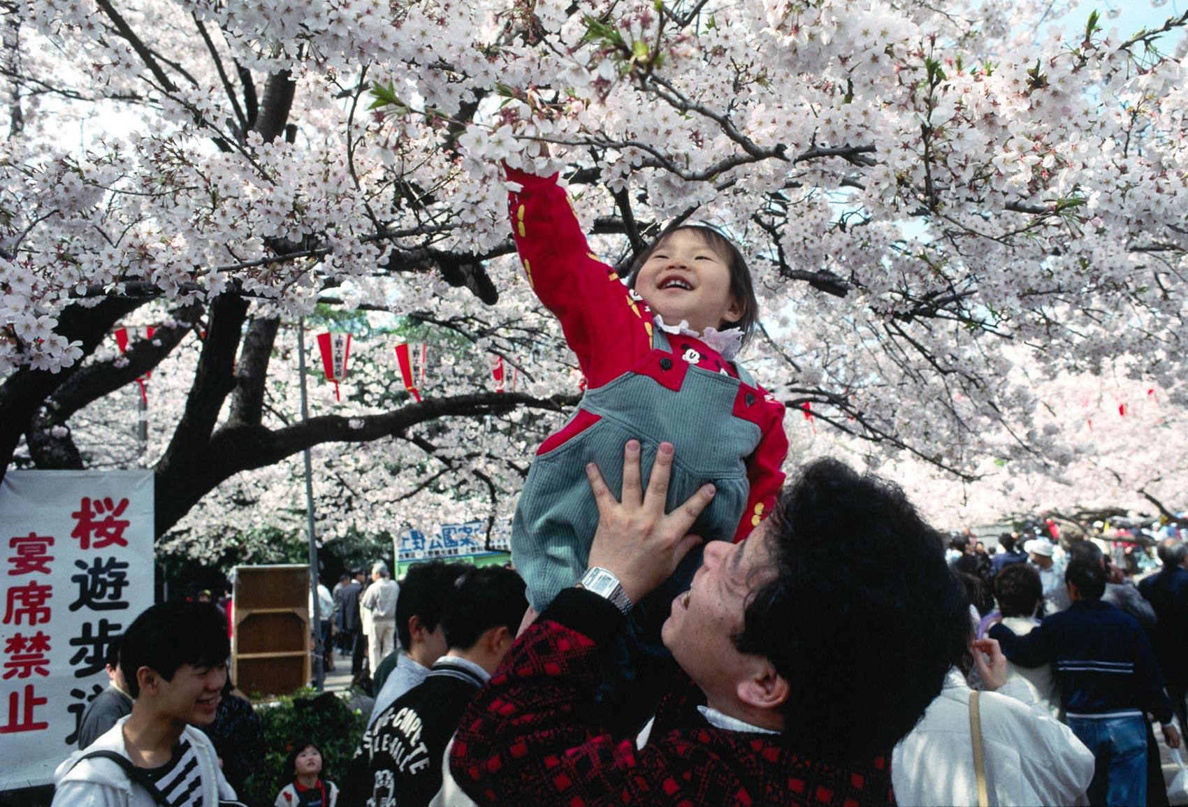 Hanami Festival Ueno Park Tokyo